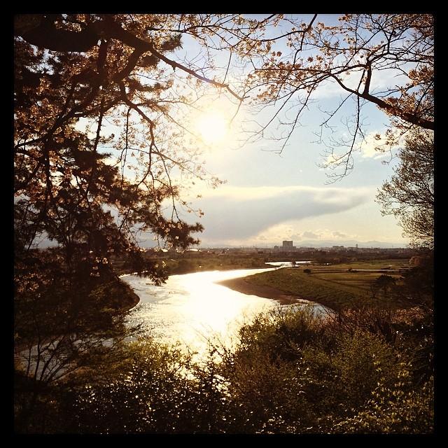 金色に輝く多摩川。キレイ♡