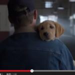 犬が役者過ぎて驚愕。バドワイザーのスーパーボールCM