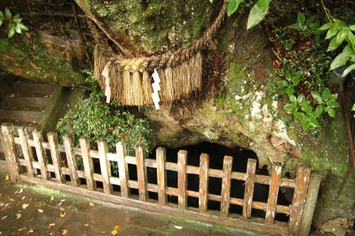 天真名井 樹齢1300年のけやき