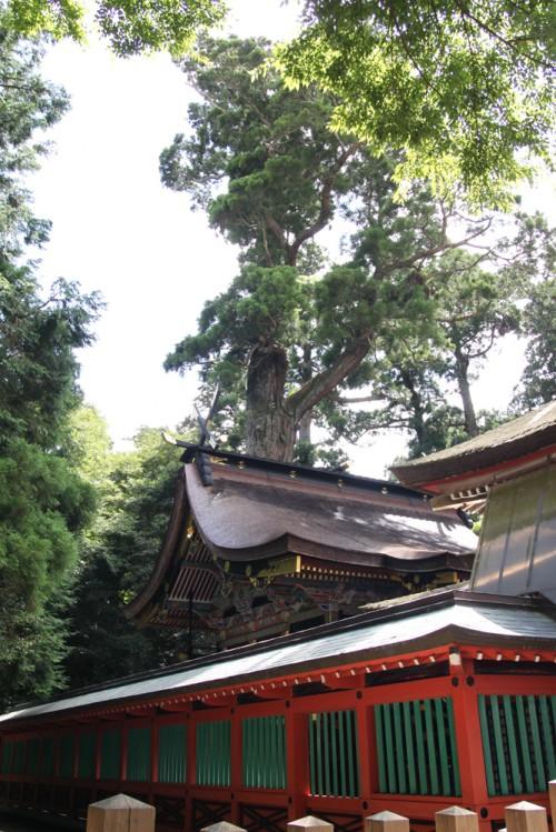 鹿島神宮 本殿とご神木